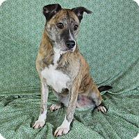 Adopt A Pet :: Audrey - Jackson, MS