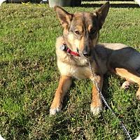 Adopt A Pet :: Luna-Referral - Dripping Springs, TX