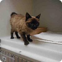 Adopt A Pet :: BOBBIE - McKinleyville, CA
