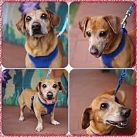 Adopt A Pet :: Newberry - Weston, FL