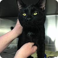 Adopt A Pet :: Murphy - Voorhees, NJ