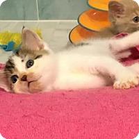 Adopt A Pet :: Spot - Orlando, FL