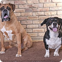Adopt A Pet :: Daisy & Feena - Chicago, IL