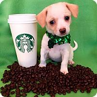 Adopt A Pet :: Frappe - Irvine, CA
