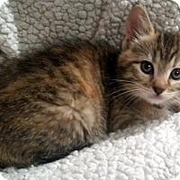 Adopt A Pet :: Katisha - Portland, OR