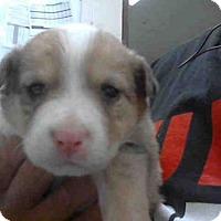 Adopt A Pet :: ZOEY - Conroe, TX