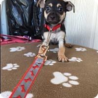 Adopt A Pet :: JYGGER - Elk Grove, CA