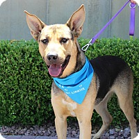 Adopt A Pet :: AMAZON - Las Vegas, NV
