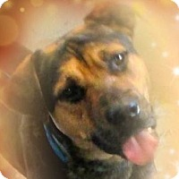 Adopt A Pet :: PRANCER-Low Fees/neutered - Red Bluff, CA