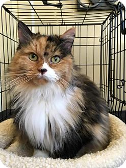 Calico Cat for adoption in Alpharetta, Georgia - Gabriella