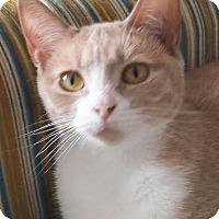 Adopt A Pet :: Misty - Colfax, IA