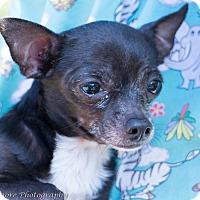 Adopt A Pet :: Scrappy - Daleville, AL