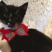 Adopt A Pet :: Pepe - El Dorado Hills, CA