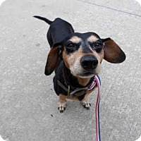 Adopt A Pet :: CANDY CANE - Pearland, TX