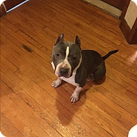 Adopt A Pet :: Zeus (COURTESY POST) - Baltimore, MD