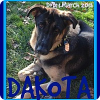 Adopt A Pet :: DAKOTA - Sebec, ME