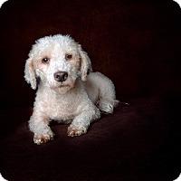 Adopt A Pet :: Austin - Van Nuys, CA