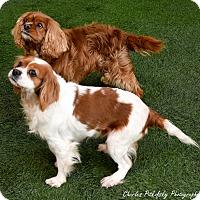 Adopt A Pet :: Buddy - Burlingame, CA