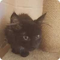 Adopt A Pet :: Elvira - Gadsden, AL