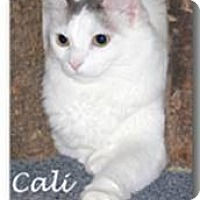 Adopt A Pet :: Cali - Nashville, TN