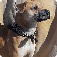 Adopt A Pet :: Mack - Medora, IN