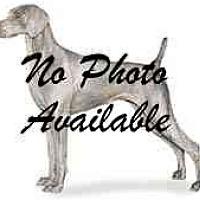 Adopt A Pet :: Nyah - Eustis, FL