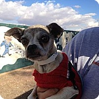 Adopt A Pet :: Elinor Rigby - scottsdale, AZ