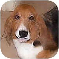 Adopt A Pet :: Archibald - Phoenix, AZ
