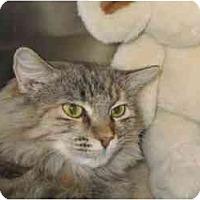 Adopt A Pet :: Jolie - Scottsdale, AZ