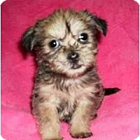Adopt A Pet :: Nelle - Mooy, AL