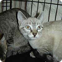 Adopt A Pet :: Aria - Mundelein, IL