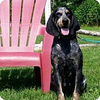 Adopt A Pet :: Beauty - Hazard, KY