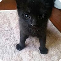 Adopt A Pet :: April - Union, KY