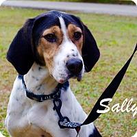 Adopt A Pet :: Sally - Daleville, AL