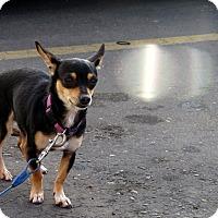 Adopt A Pet :: Annie - Meridian, ID