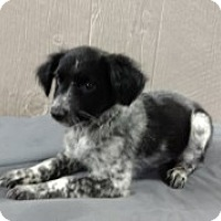 Adopt A Pet :: Matilda Adoption pending - Manchester, CT