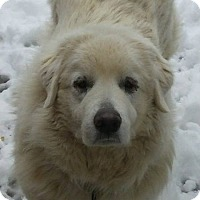 Adopt A Pet :: KD - Germantown, MD