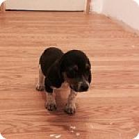 Adopt A Pet :: Reese - Dumfries, VA