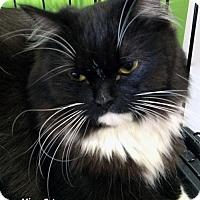Adopt A Pet :: Missy - Irvine, CA