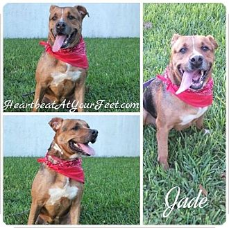 Pit Bull Terrier/American Pit Bull Terrier Mix Dog for adoption in Miami, Florida - Jade