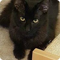 Adopt A Pet :: Richie - Encino, CA