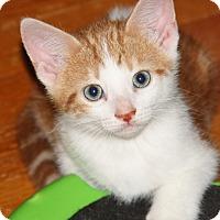 Adopt A Pet :: Beane - Berkeley Hts, NJ