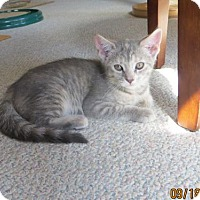 Adopt A Pet :: Opal - Lockport, NY