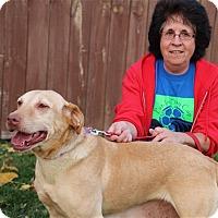 Adopt A Pet :: Mindy - Elyria, OH