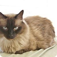 Adopt A Pet :: Charley Bucket - Davis, CA
