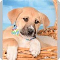 Adopt A Pet :: Quinn - Pittsboro, NC