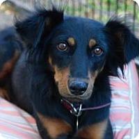 Adopt A Pet :: Novia - San Ramon, CA