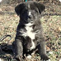 Adopt A Pet :: STAR/ADOPTED - PRINCETON, KY