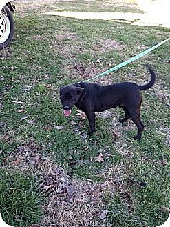 Labrador Retriever/Hound (Unknown Type) Mix Dog for adoption in Cookeville, Tennessee - Buttercup