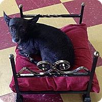 Adopt A Pet :: Jada - Clermont, FL